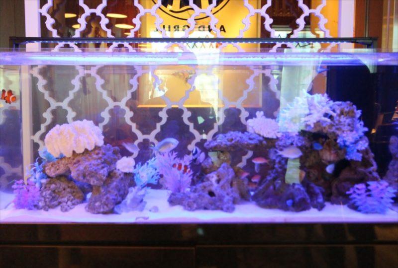 シャングリ・ラ ホテル 東京 様 水槽短期レンタル 水槽画像5