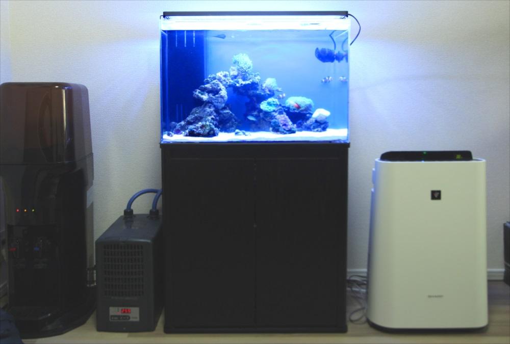 自宅リビング 60cm海水魚水槽 正面画像