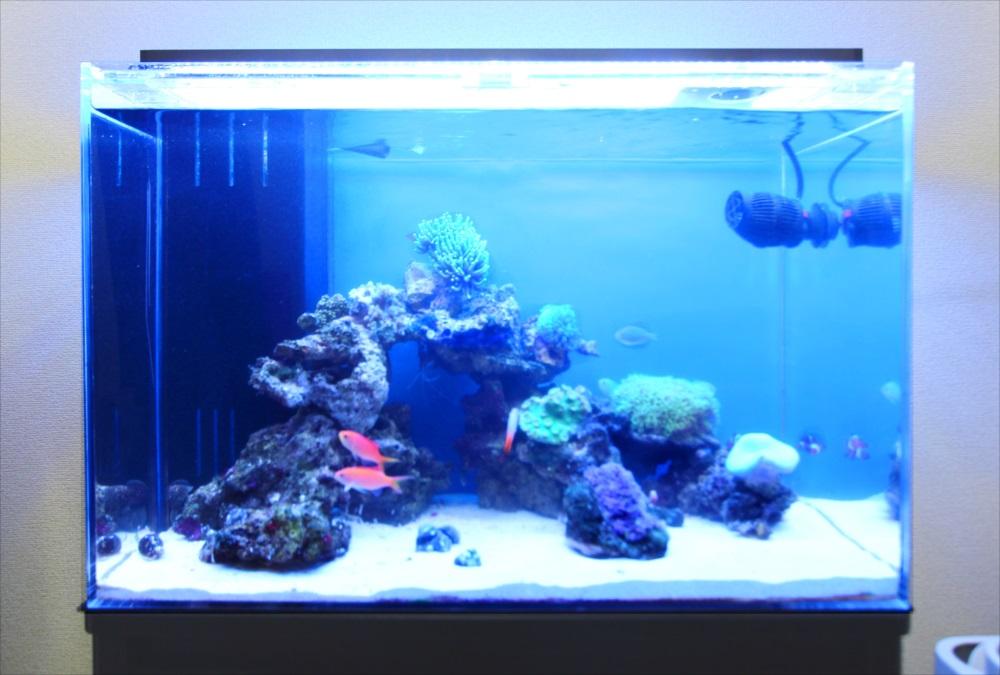 自宅リビング 60cm海水魚水槽 正面アップ画像