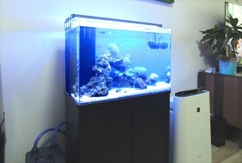 自宅リビング 60cm海水魚水槽 斜め画像