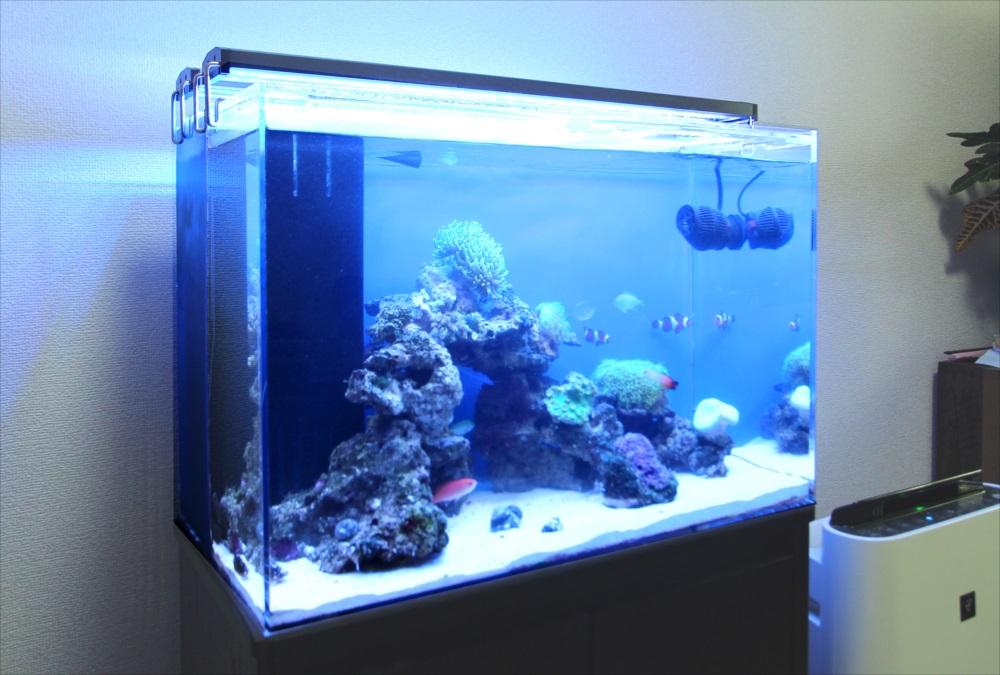 自宅リビング 60cm海水魚水槽 サンゴ画像