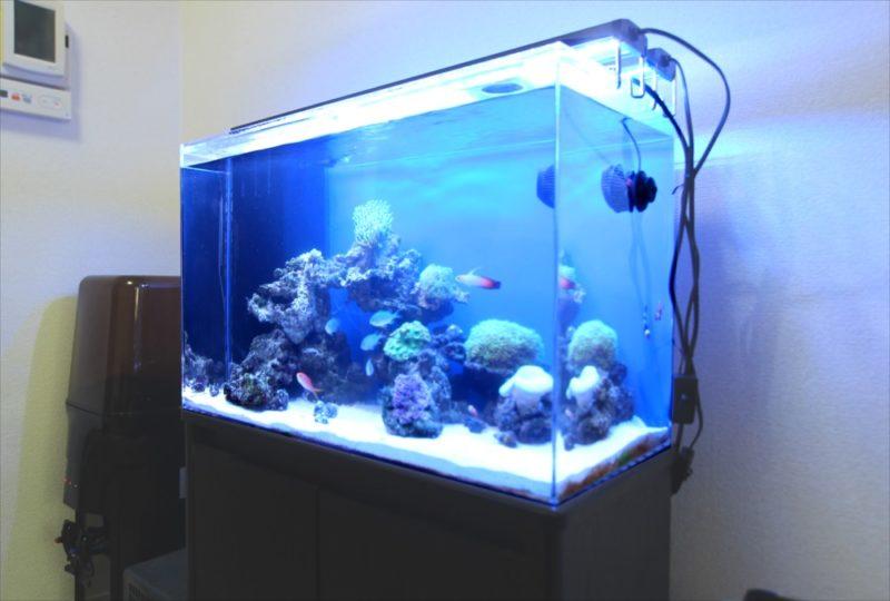 個人宅 リビング 60cm海水サンゴ水槽 設置事例 水槽画像4