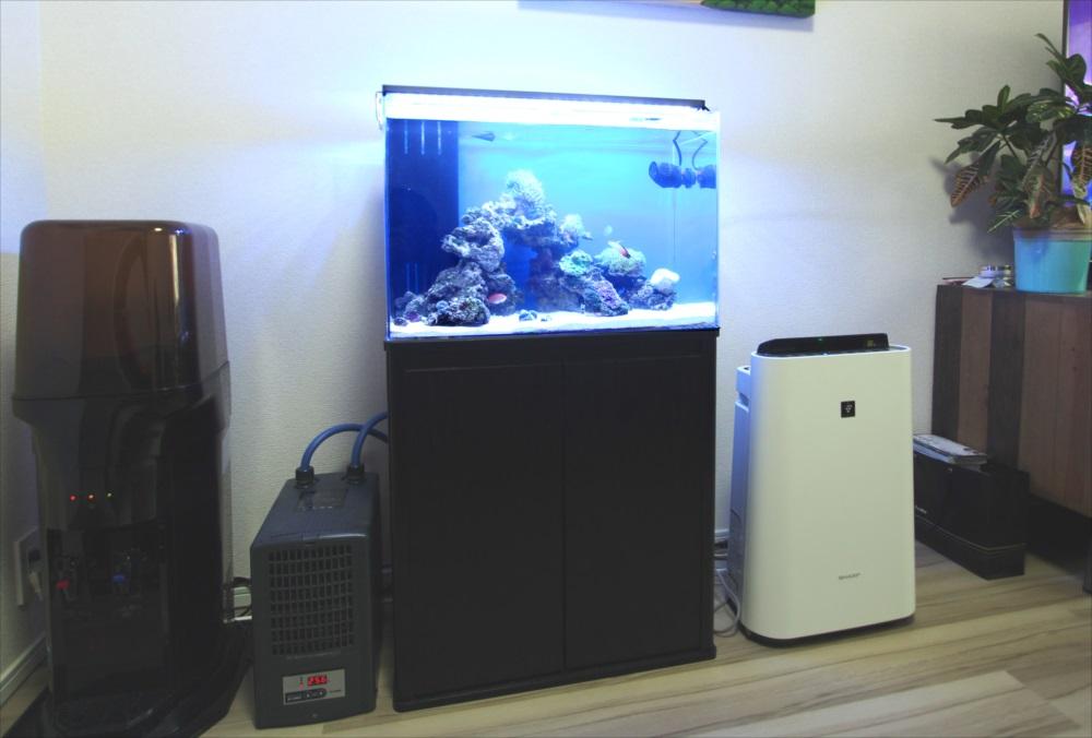 個人宅 リビング 60cm海水サンゴ水槽 設置事例 メイン画像