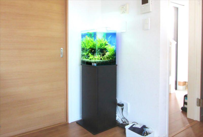 2週間お試し体験水槽レンタル!30cm淡水魚水槽を無料設置 水槽画像1