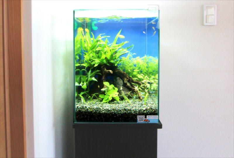 2週間お試し体験水槽レンタル!30cm淡水魚水槽を無料設置 水槽画像2
