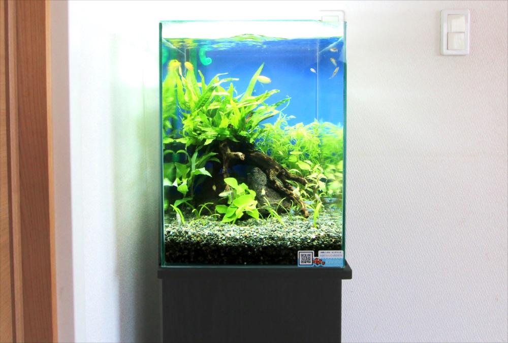 自宅 30cm淡水魚水槽 正面画像