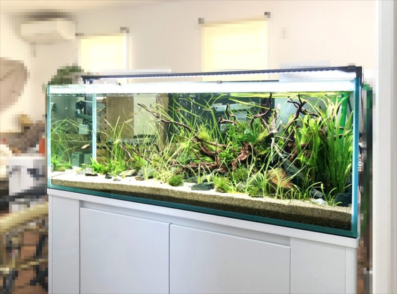 個人宅 リビング 120cm淡水魚水槽 設置事例 水槽画像5