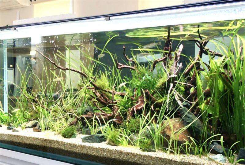 個人宅 リビング 120cm淡水魚水槽 設置事例 水槽画像3
