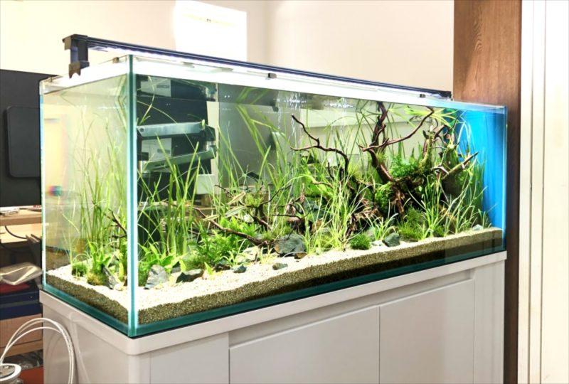 個人宅 リビング 120cm淡水魚水槽 設置事例 水槽画像4