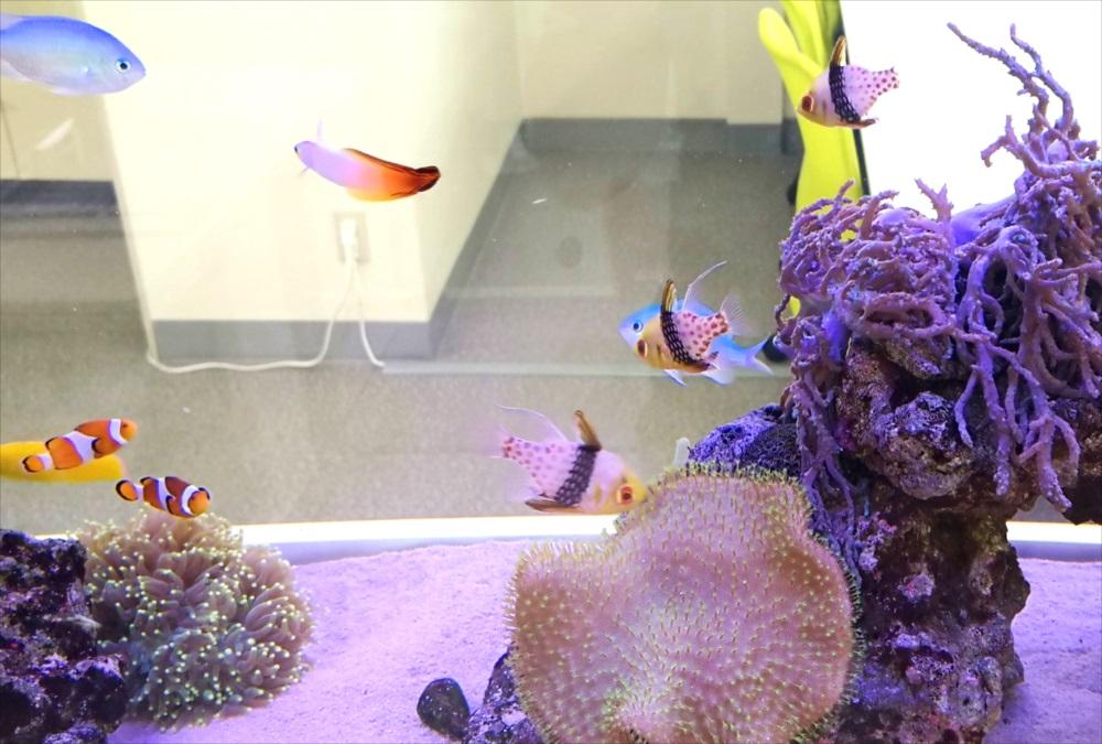オフィス事務所 180cm海水魚水槽 正面画像