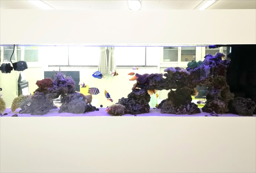 オフィス事務所 180cm海水魚水槽 アップ画像