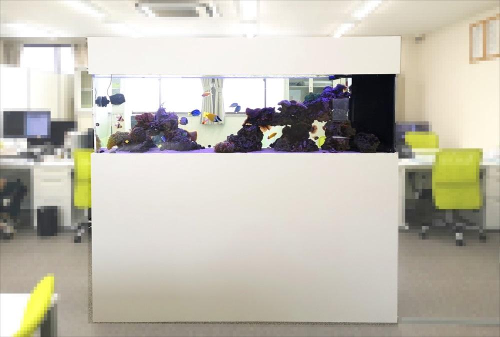 神奈川県 オフィス事務所 180cm海水・サンゴ水槽リース事例 その後 メイン画像