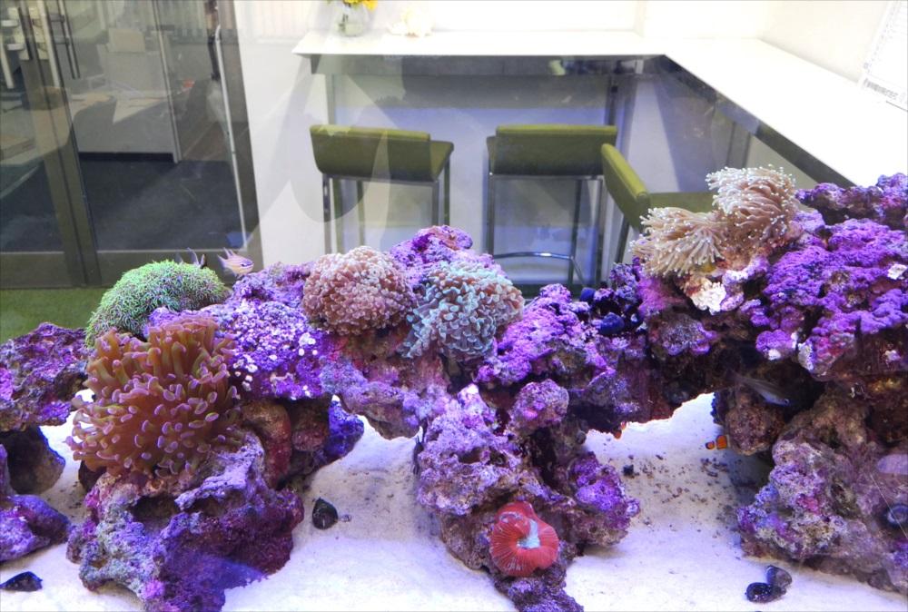 オフィス事務所 180cm海水魚水槽 サンゴアップ画像