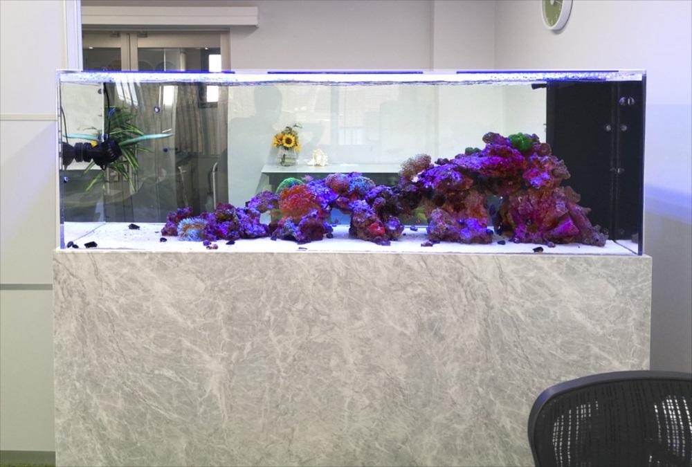 オフィス事務所 大型海水・サンゴ水槽 リース事例 メイン画像