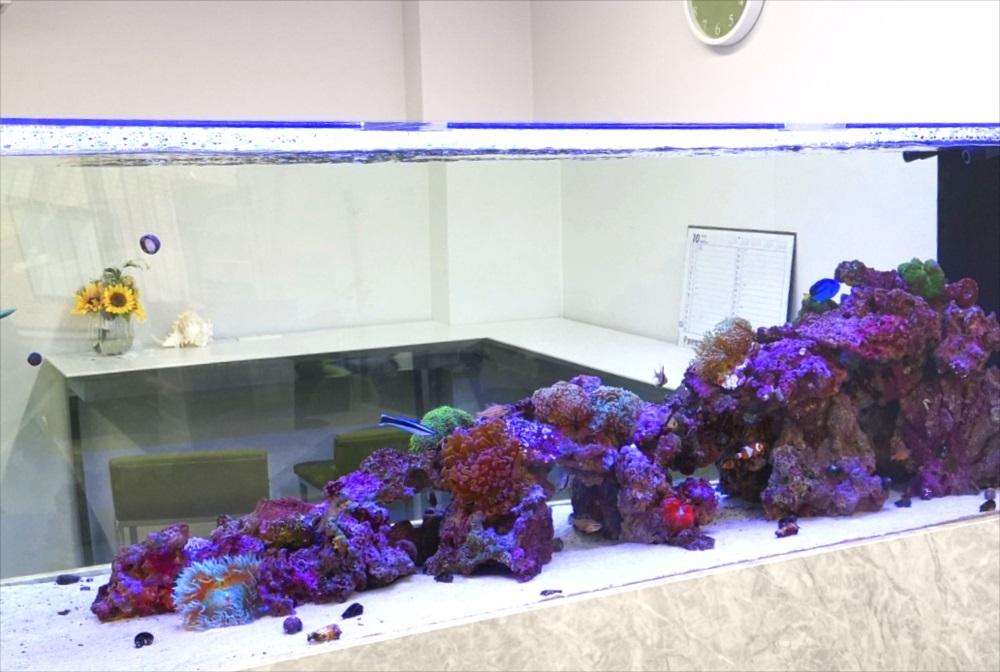 オフィス事務所 180cm海水魚水槽 サンゴ画像