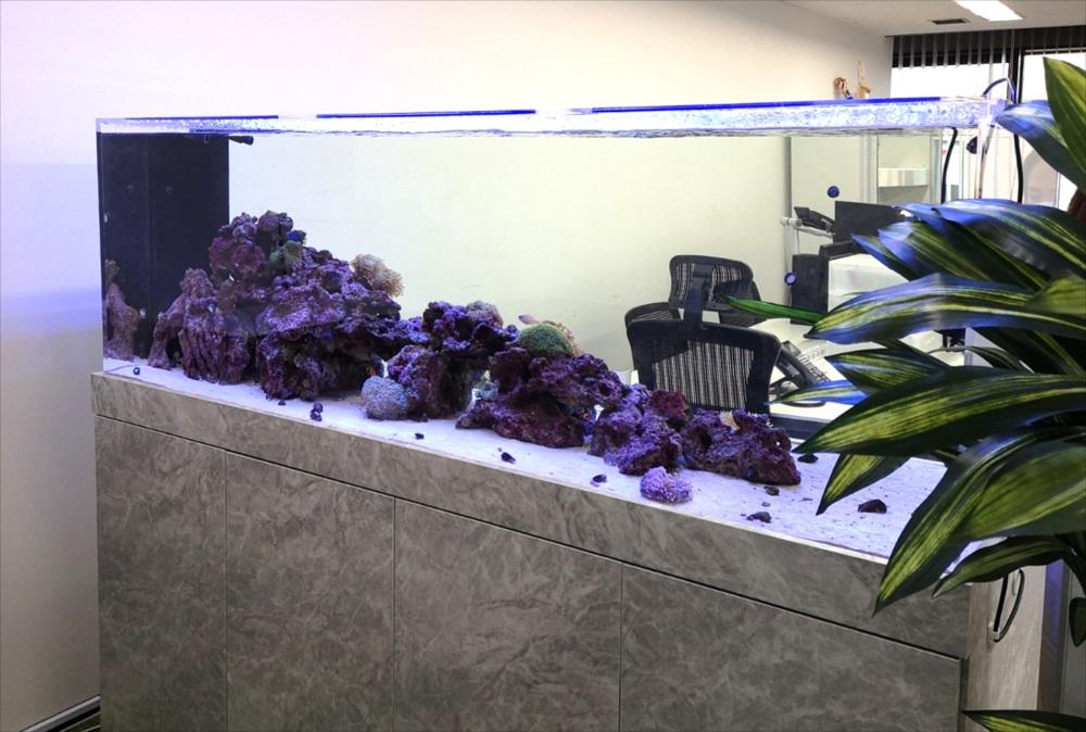 オフィス事務所 180cm海水魚水槽 斜め全体画像