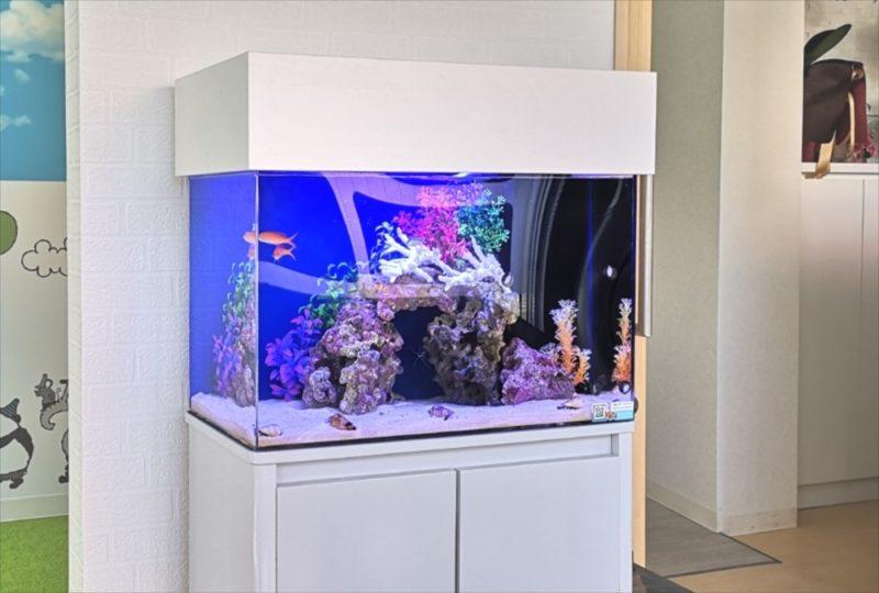 さいたま市 歯科クリニック 60cm海水魚水槽 設置事例 水槽画像2