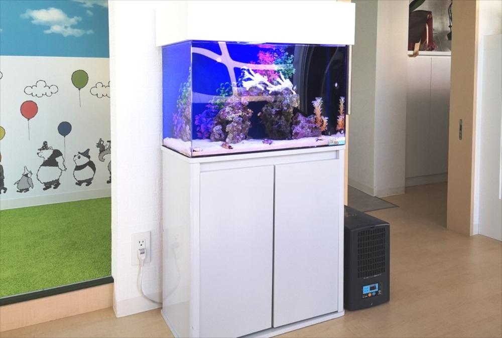 さいたま市 歯科クリニック 60cm海水魚水槽 設置事例 メイン画像
