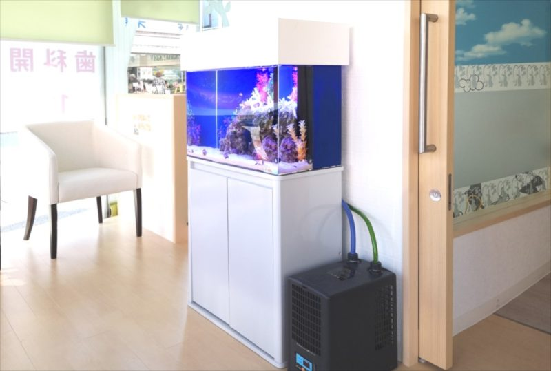 さいたま市 歯科クリニック 60cm海水魚水槽 設置事例 水槽画像5