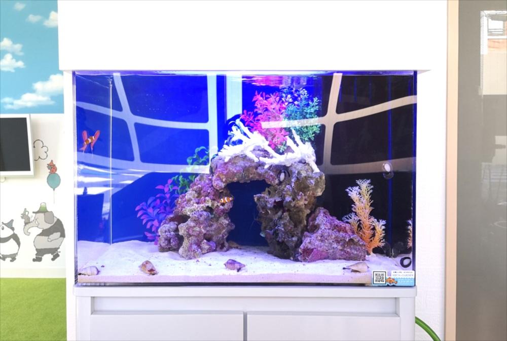 歯科クリニック 60cm海水魚水槽 レイアウト画像