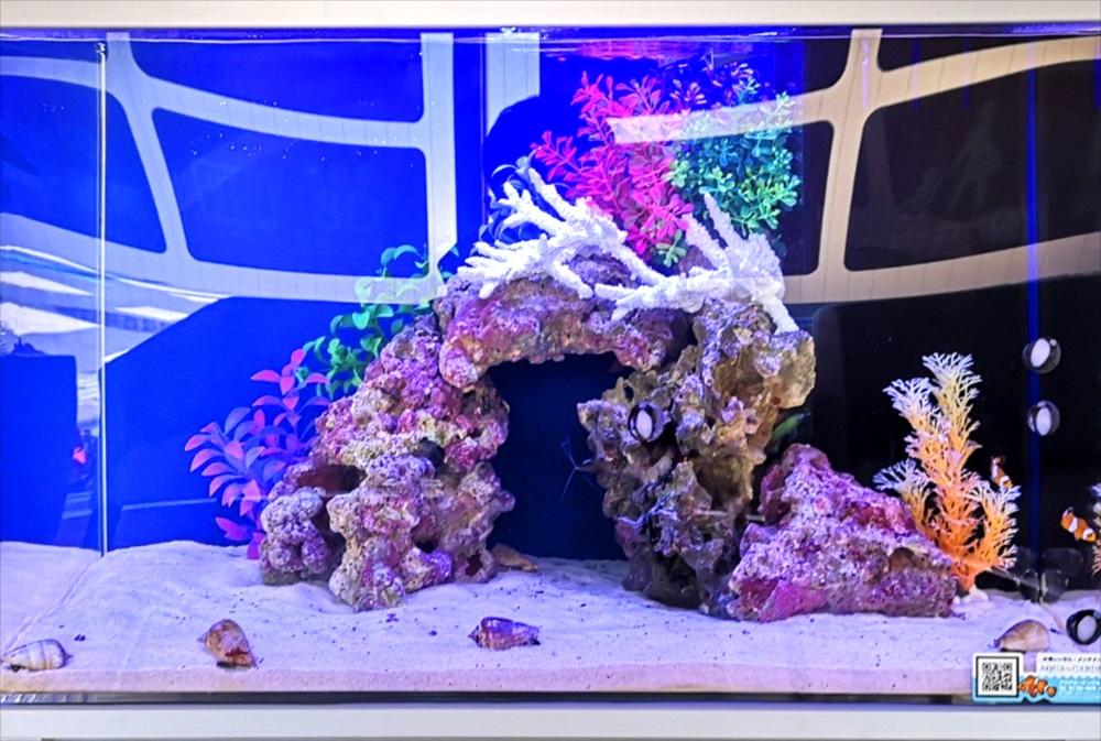 歯科クリニック 60cm海水魚水槽 ライブロック画像