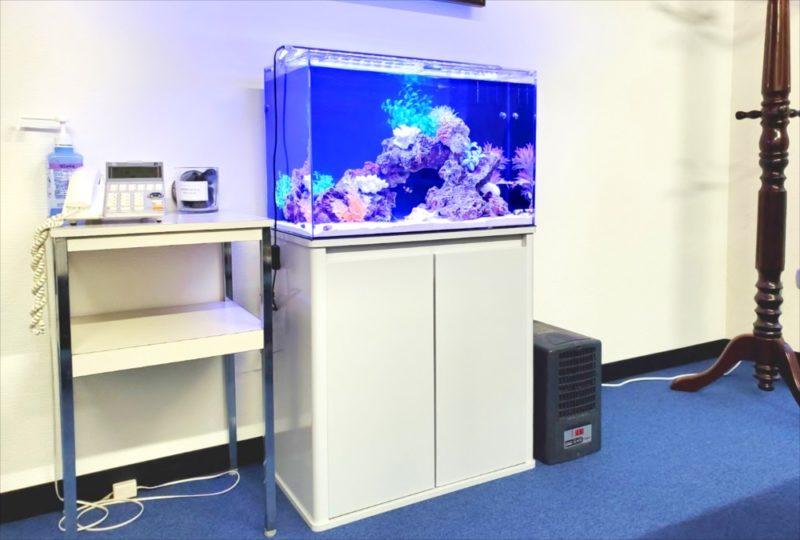 台東区 オフィス事務所 60cm海水魚水槽 設置事例 水槽画像1