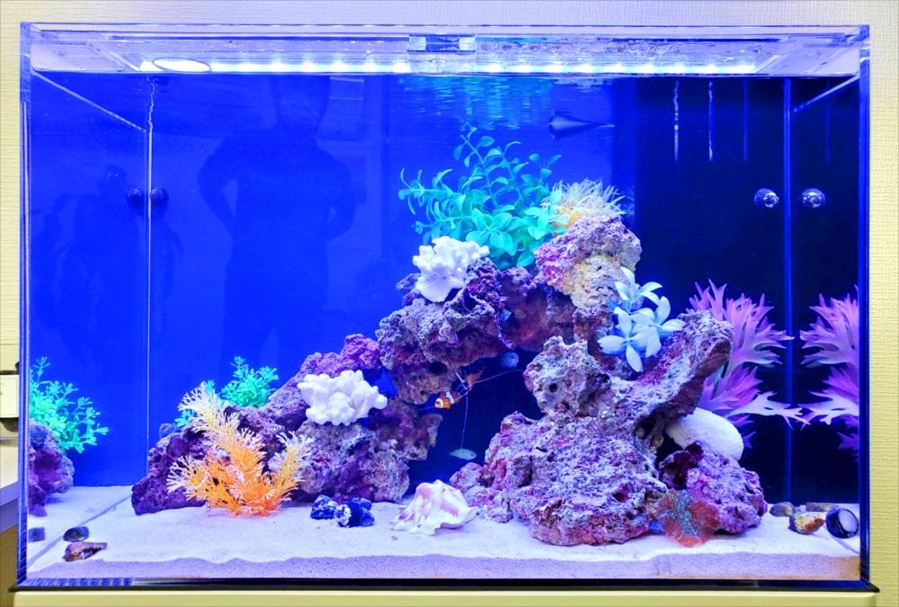 オフィス事務所 60cm海水魚水槽 レイアウト画像