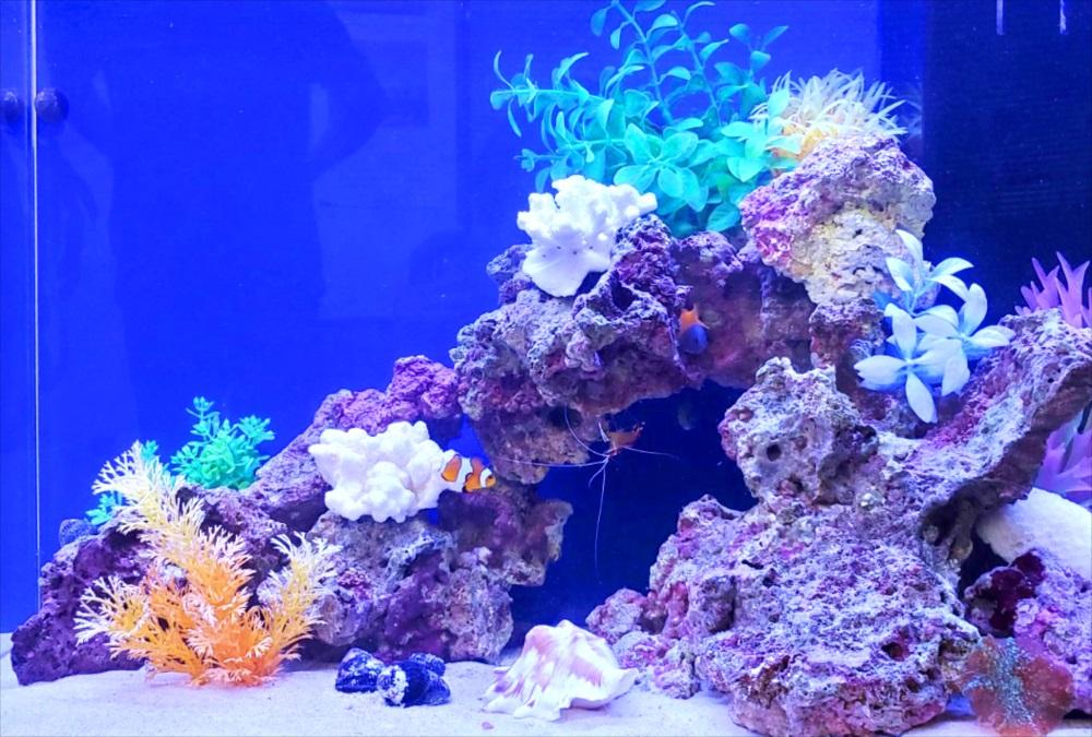 オフィス事務所 60cm海水魚水槽 生体画像