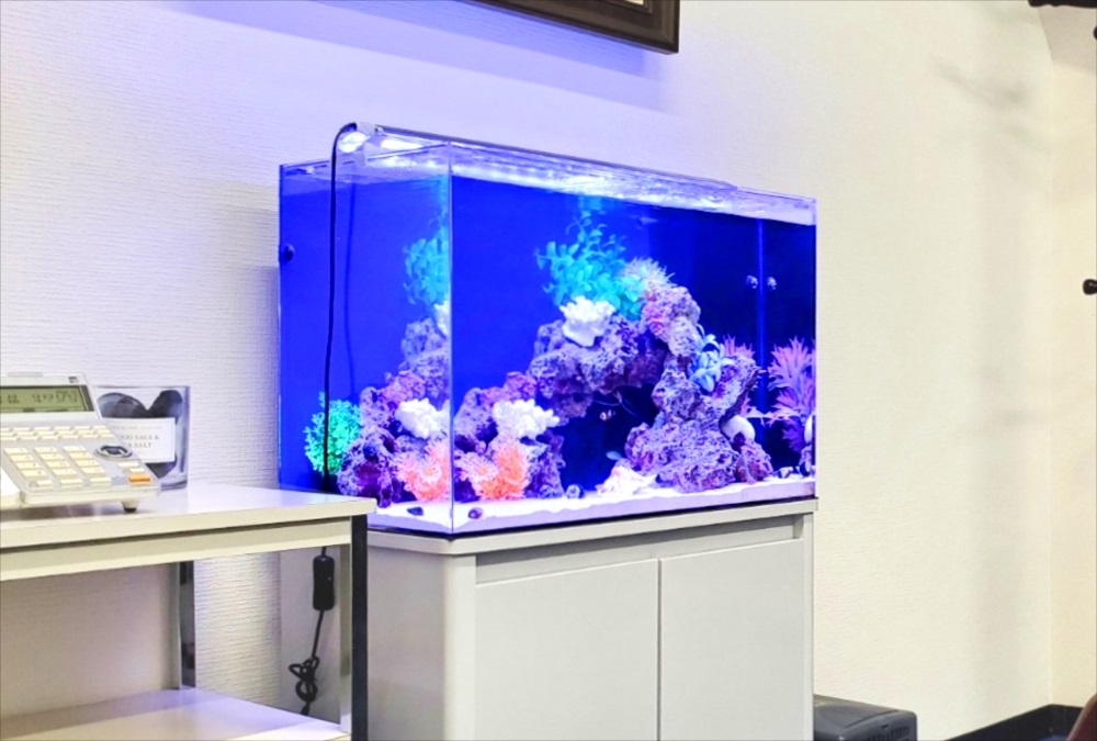 オフィス事務所 60cm海水魚水槽 斜めアップ画像