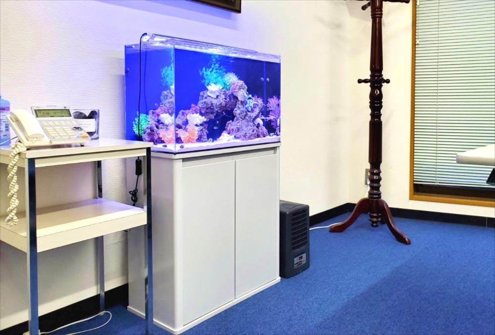 オフィス事務所 60cm海水魚水槽 斜め画像