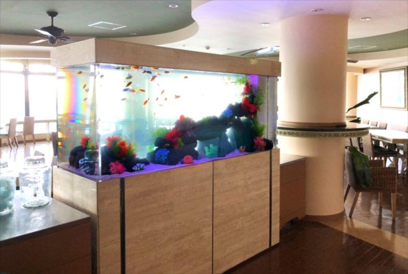 江の島アイランドスパ 様 大型淡水魚水槽リース事例 水槽画像1