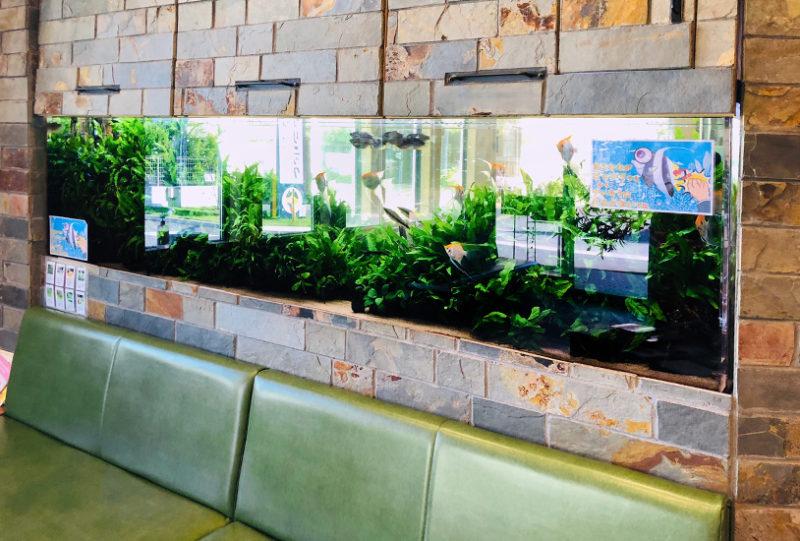 薬局の待合室 大型淡水魚水槽 リース事例 その後 水槽画像2