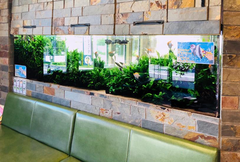 薬局の待合室 大型淡水魚水槽 アップ画像