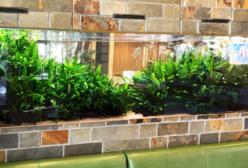 薬局の待合室 大型淡水魚水槽 リース事例 その後 水槽画像1