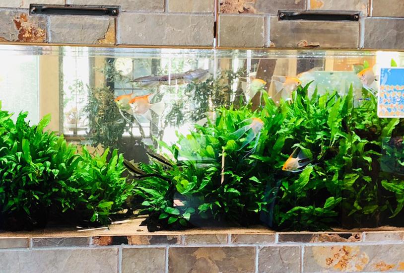 薬局の待合室 大型淡水魚水槽 斜め画像