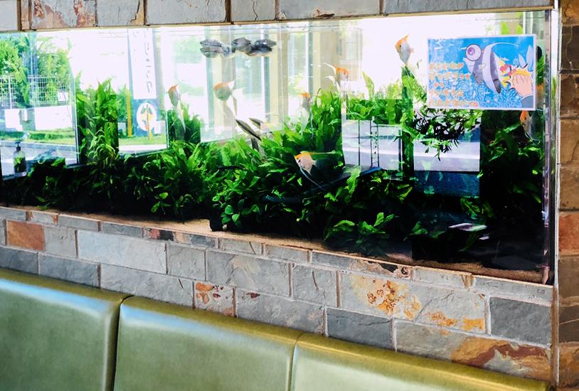 薬局の待合室 大型淡水魚水槽 斜めアップ画像