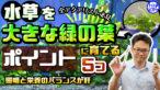 YouTube更新「【全アクアリスト必見】水草を大きな緑の葉に育てるポイント5つ!照明と栄養のバランスで解決! 」