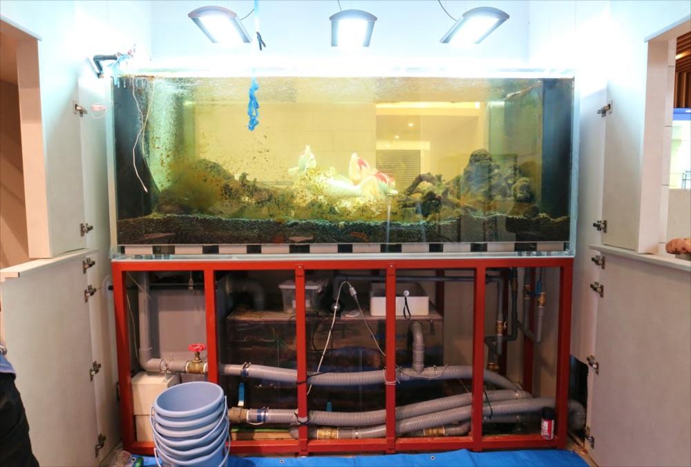 大型鯉水槽 スポットメンテナンス メンテナンス前画像