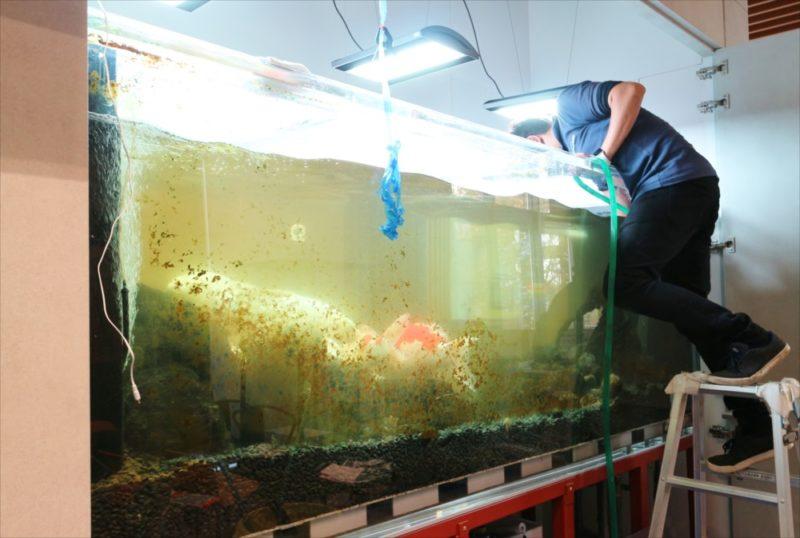 大学キャンパス 大型鯉水槽 スポットメンテナンス事例 水槽画像5