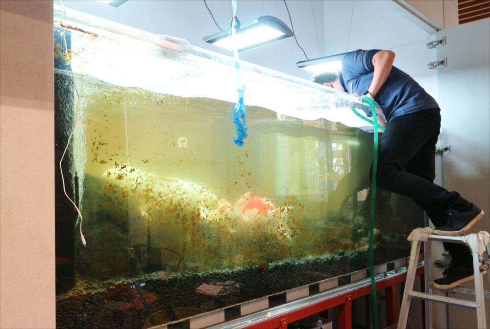 大型鯉水槽 スポットメンテナンス メンテナンス画像