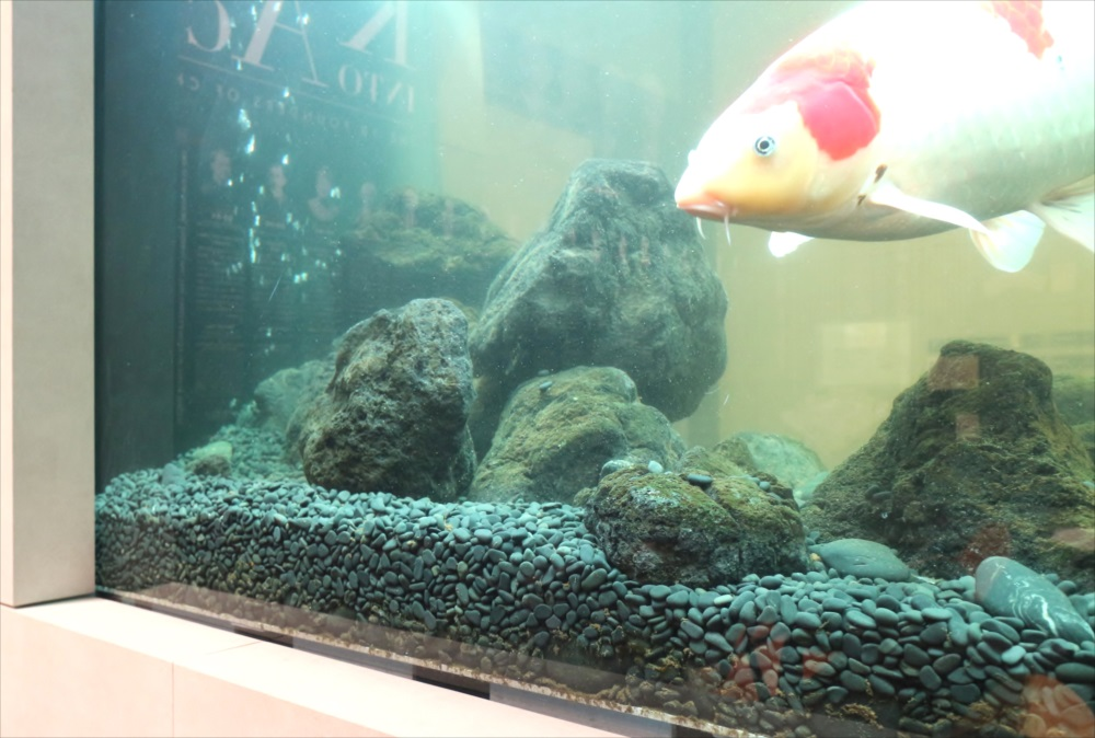 大型鯉水槽 スポットメンテナンス 正面画像