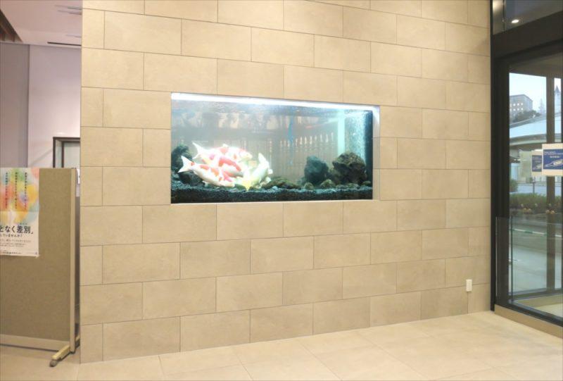 大学キャンパス 大型鯉水槽 スポットメンテナンス事例 水槽画像2