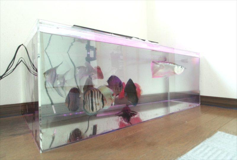 個人宅 アロワナの移動 水槽入れ替え事例 水槽画像2