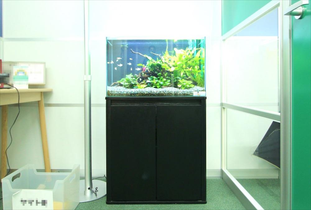 会計事務所 60cm淡水魚水槽 正面画像