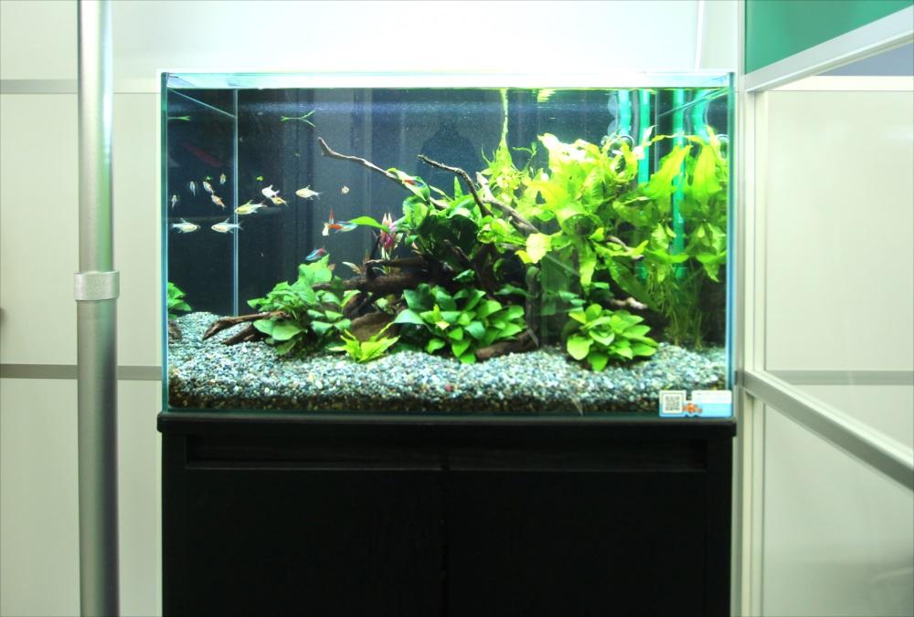 会計事務所 60cm淡水魚水槽 正面アップ画像