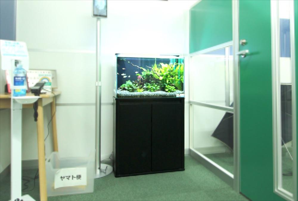 会計事務所 60cm淡水魚水槽 斜め画像