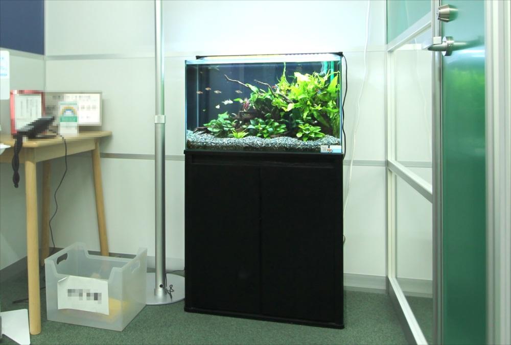 港区 会計事務所 60cm淡水魚水槽 設置事例