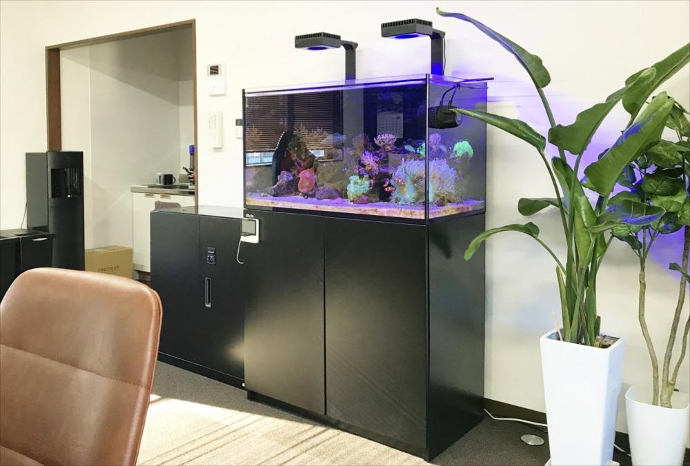 サンゴ水槽 スポットメンテナンス 全体画像