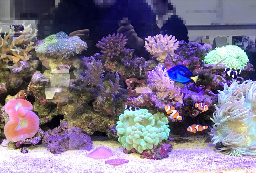 サンゴ水槽 スポットメンテナンス 正面画像