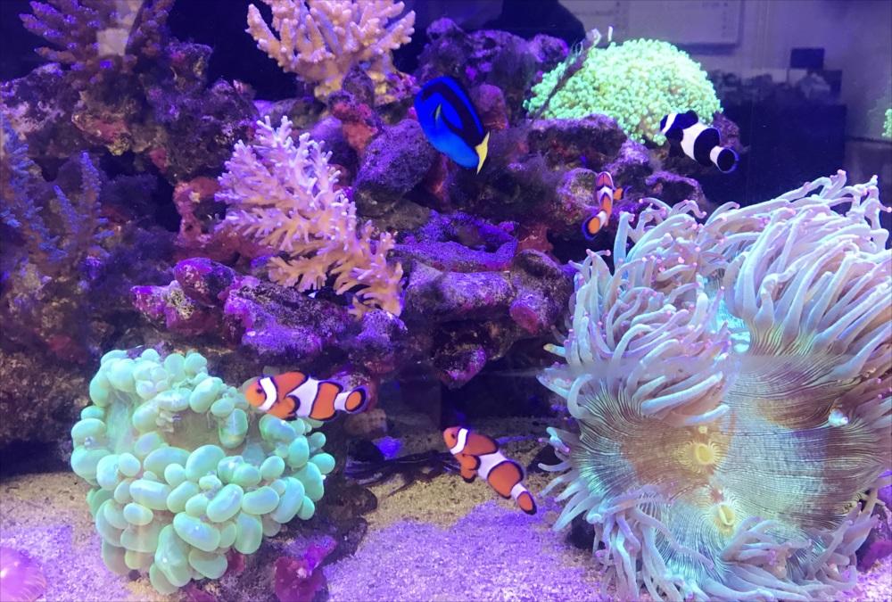 サンゴ水槽 スポットメンテナンス 熱帯魚画像